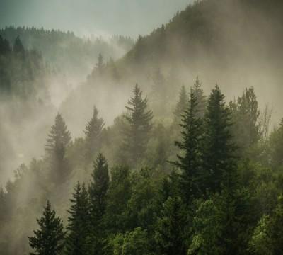 Фотошторы «Туманный закат в лесу»