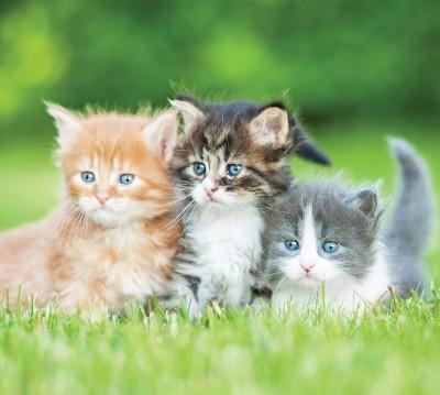 Фотошторы «Котятки»