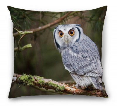 3D Подушка «Симпатичная сова»