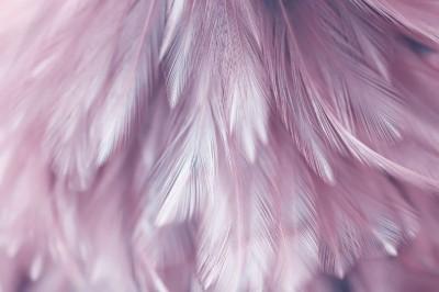 3D Фотообои «Розовая нежность»