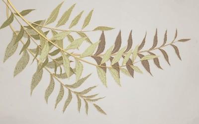 3D Фотообои «Ветви с золотом на бежевом фоне»