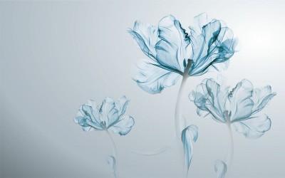 3D Фотообои «Облачные тюльпаны»