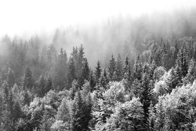 3D Фотообои «Заснеженный туманный лес»