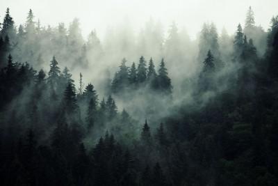 3D Фотообои «Туманная чаща»
