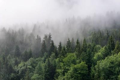 3D Фотообои «Утро в хвойном лесу»