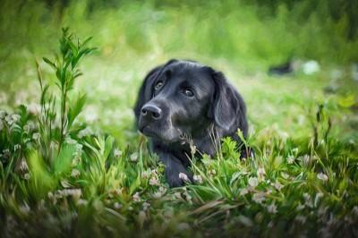 3D Фотообои «Собачка в траве»