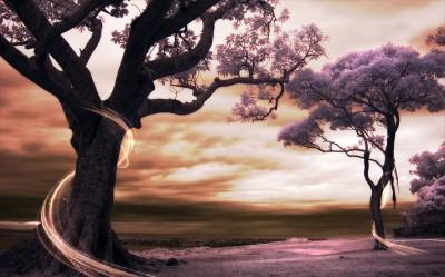 3D Фотообои «Фиолетовые деревья»