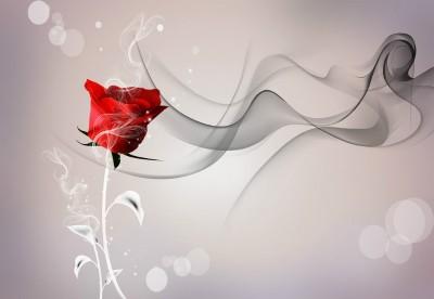 3D Фотообои «Красная роза на сером фоне»