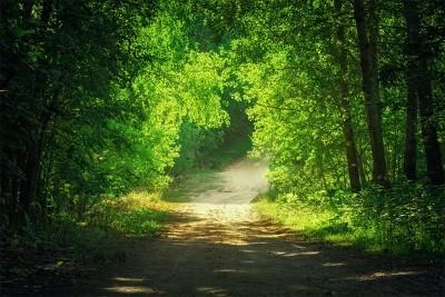 3D Фотообои  «Тропинка в зеленом лесу»