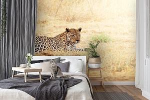 3D Фотообои «Леопард» вид 7