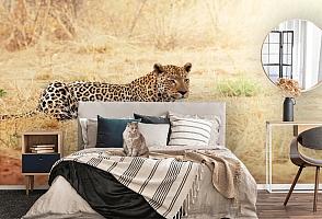 3D Фотообои «Леопард» вид 5