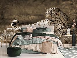 3D Фотообои «Леопард сепия» вид 3