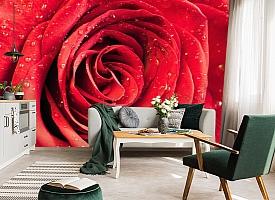 3D Фотообои «Красная роза» вид 7