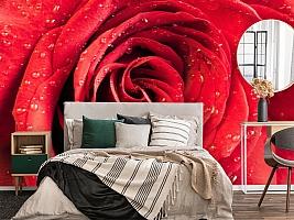 3D Фотообои «Красная роза» вид 4