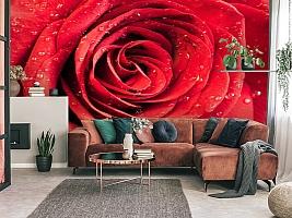 3D Фотообои «Красная роза» вид 3