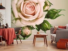 3D Фотообои «Роза» вид 5