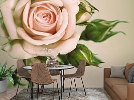 3D Фотообои «Роза» вид 2