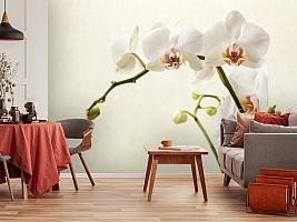 3D Фотообои «Белая орхидея» вид 5