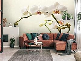 3D Фотообои «Белая орхидея» вид 3