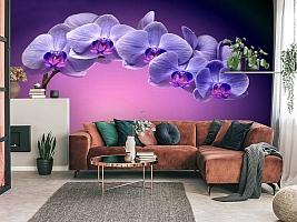 3D Фотообои «Фиолетовая орхидея» вид 3