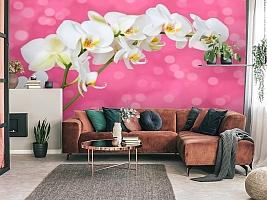 3D Фотообои «Белая орхидея на розовом фоне» вид 3