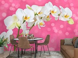 3D Фотообои «Белая орхидея на розовом фоне» вид 2
