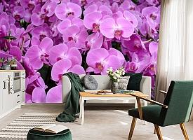 3D Фотообои «Ковер из орхидей» вид 7