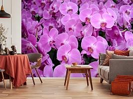 3D Фотообои «Ковер из орхидей» вид 5
