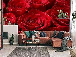 3D Фотообои «Бархатные розы в каплях утренней росы» вид 3