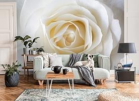 3D Фотообои «Белая нежность» вид 8