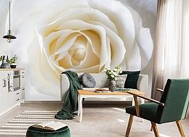 3D Фотообои «Белая нежность» вид 7