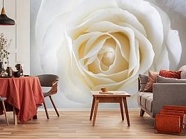 3D Фотообои «Белая нежность» вид 5
