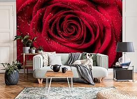 3D Фотообои «Большая роза в росе» вид 8