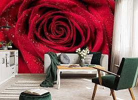 3D Фотообои «Большая роза в росе» вид 7