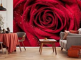 3D Фотообои «Большая роза в росе» вид 5