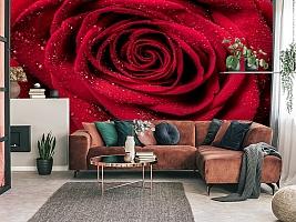 3D Фотообои «Большая роза в росе» вид 3