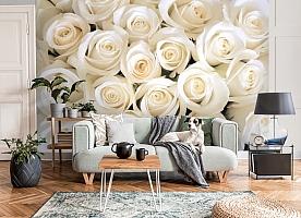 3D Фотообои «Нежные белые розы» вид 8