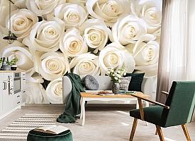 3D Фотообои «Нежные белые розы»