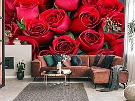 3D Фотообои «Нежные бордовые розы» вид 3