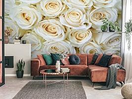 3D Фотообои «Нежные кремовые розы» вид 3