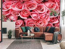 3D Фотообои «Обилие роз» вид 3