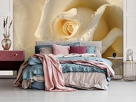3D Фотообои «Утренняя роза»
