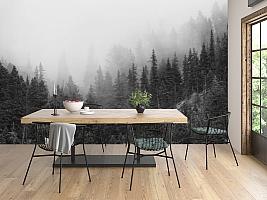 3D Фотообои «Черно-белый лес в тумане»