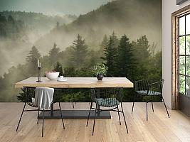 3D Фотообои «Туманный закат в лесу»