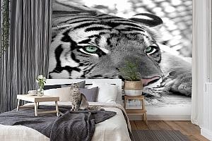 3D Фотообои  «Тигр черно-белые»  вид 7