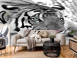 3D Фотообои  «Тигр черно-белые»  вид 4