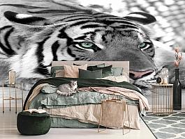 3D Фотообои  «Тигр черно-белые»  вид 3