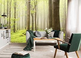 3D Фотообои  «Зеленый лес»  вид 6