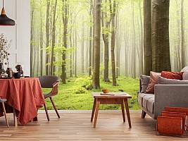 3D Фотообои  «Зеленый лес»  вид 5