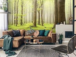 3D Фотообои  «Зеленый лес»  вид 3